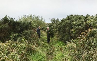 September 2017: Keeping the 'West Island Way' clear at the Gortons path